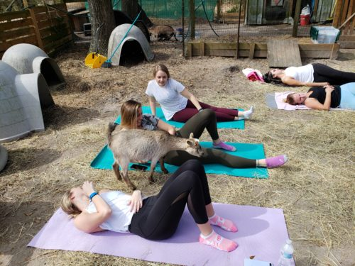 Goat Yoga Feb 2019 (1)