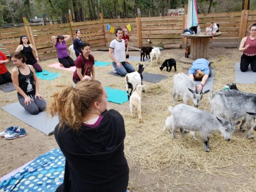 Goat Yoga Feb 2019 (101)