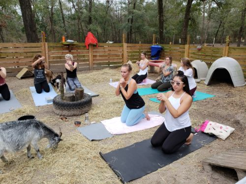 Goat Yoga Feb 2019 (102)