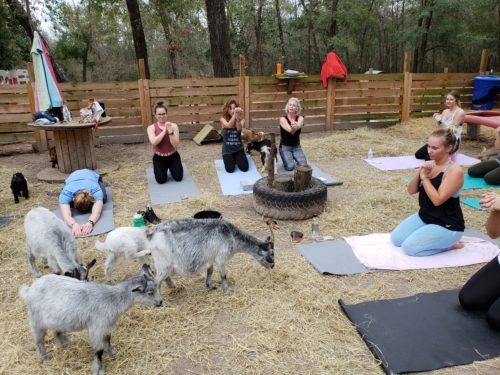Goat Yoga Feb 2019 (103)