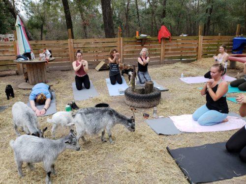 Goat Yoga Feb 2019 (103)