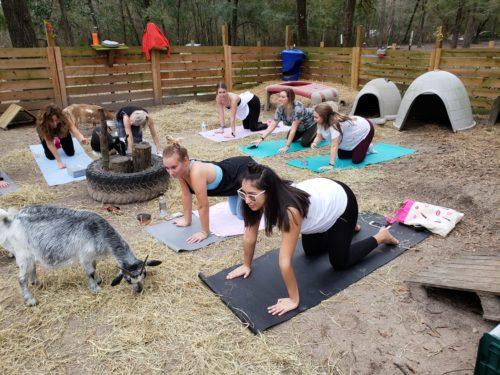 Goat Yoga Feb 2019 (105)