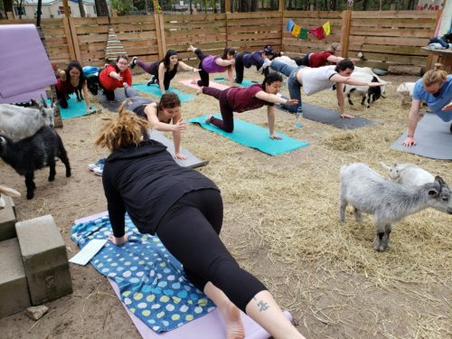 Goat Yoga Feb 2019 (107)