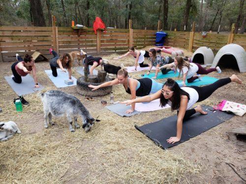 Goat Yoga Feb 2019 (108)