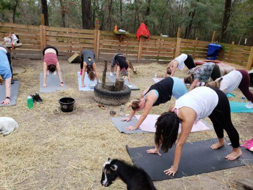 Goat Yoga Feb 2019 (113)