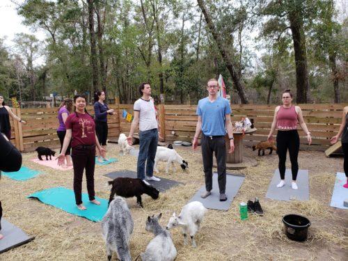 Goat Yoga Feb 2019 (116)