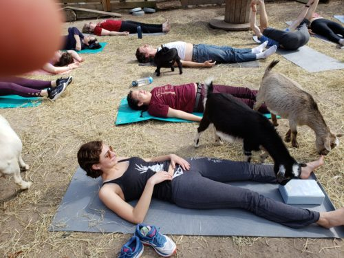 Goat Yoga Feb 2019 (12)