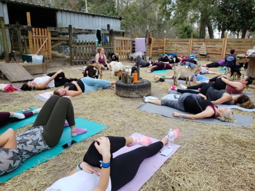 Goat Yoga Feb 2019 (5)
