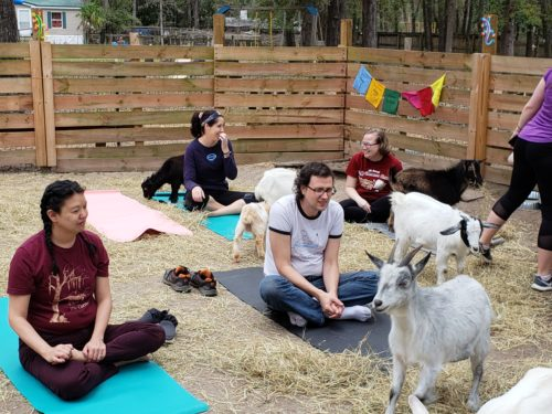 Goat Yoga Feb 2019 (51)