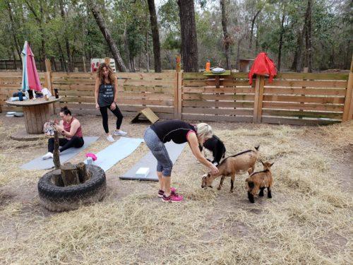 Goat Yoga Feb 2019 (52)