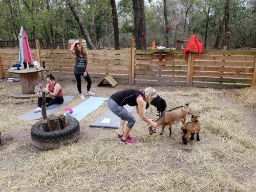 Goat Yoga Feb 2019 (53)