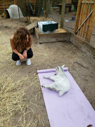 Goat Yoga Feb 2019 (56)