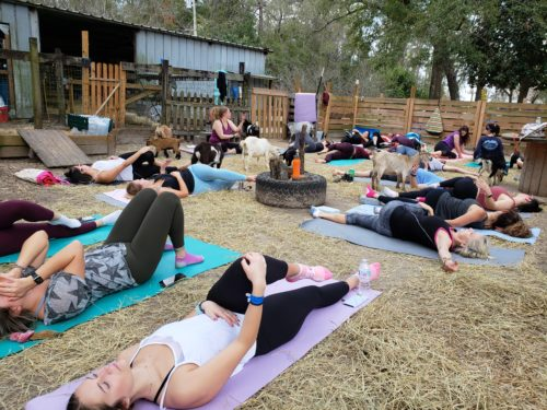Goat Yoga Feb 2019 (6)