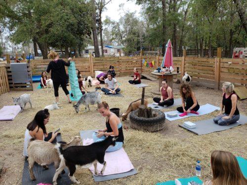 Goat Yoga Feb 2019 (62)
