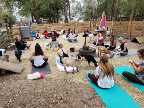 Goat Yoga Feb 2019 (65)