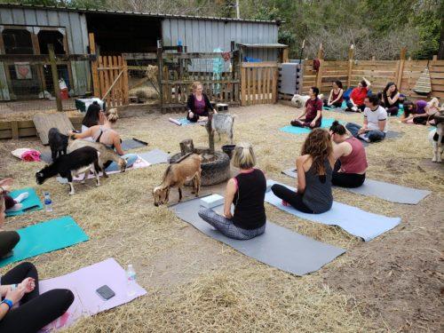 Goat Yoga Feb 2019 (66)
