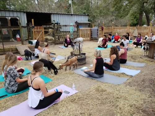 Goat Yoga Feb 2019 (67)