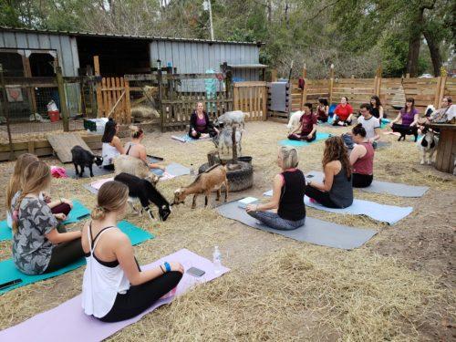 Goat Yoga Feb 2019 (67)