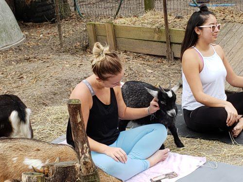 Goat Yoga Feb 2019 (76)