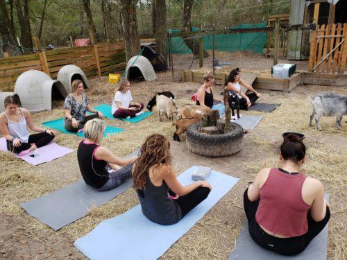 Goat Yoga Feb 2019 (77)