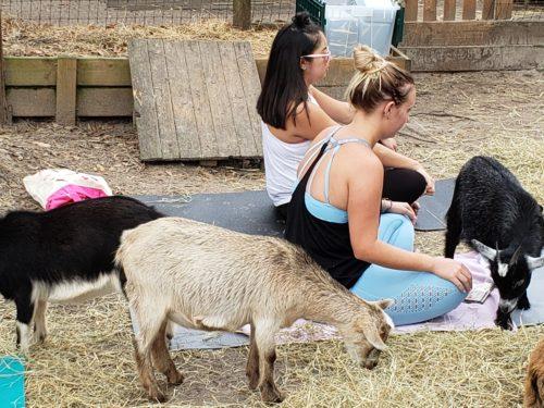 Goat Yoga Feb 2019 (79)