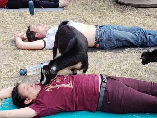 Goat Yoga Feb 2019 (8)