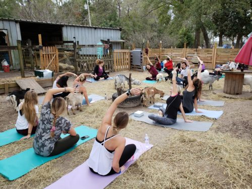 Goat Yoga Feb 2019 (80)