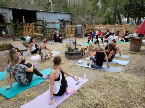 Goat Yoga Feb 2019 (82)