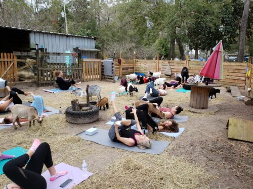 Goat Yoga Feb 2019 (87)