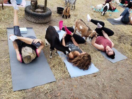 Goat Yoga Feb 2019 (88)