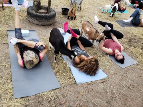 Goat Yoga Feb 2019 (88)