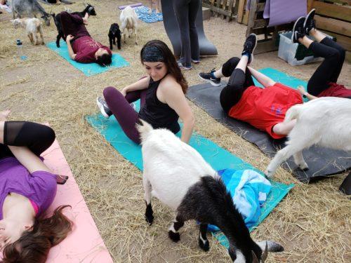 Goat Yoga Feb 2019 (94)