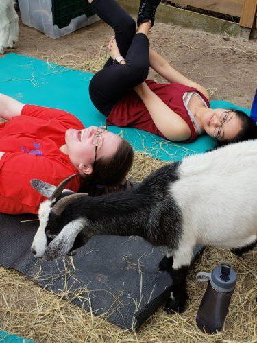 Goat Yoga Feb 2019 (97)