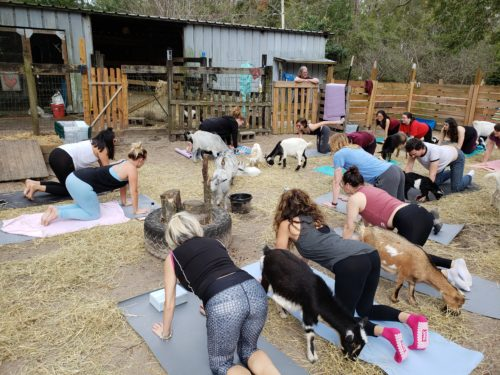 Goat Yoga Feb 2019 (98)